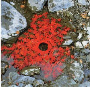 andy_goldsworthy_hole_in_leaves_ouchiyama_mura_jap_22_nov_1987_1987_6_888